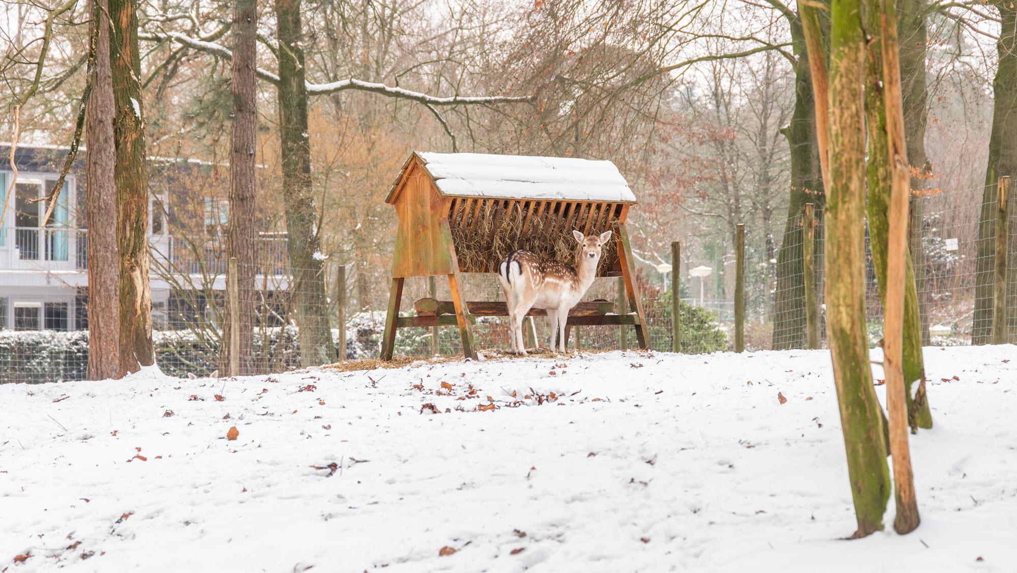 Molecaten winter in een bungalow in het bos 7