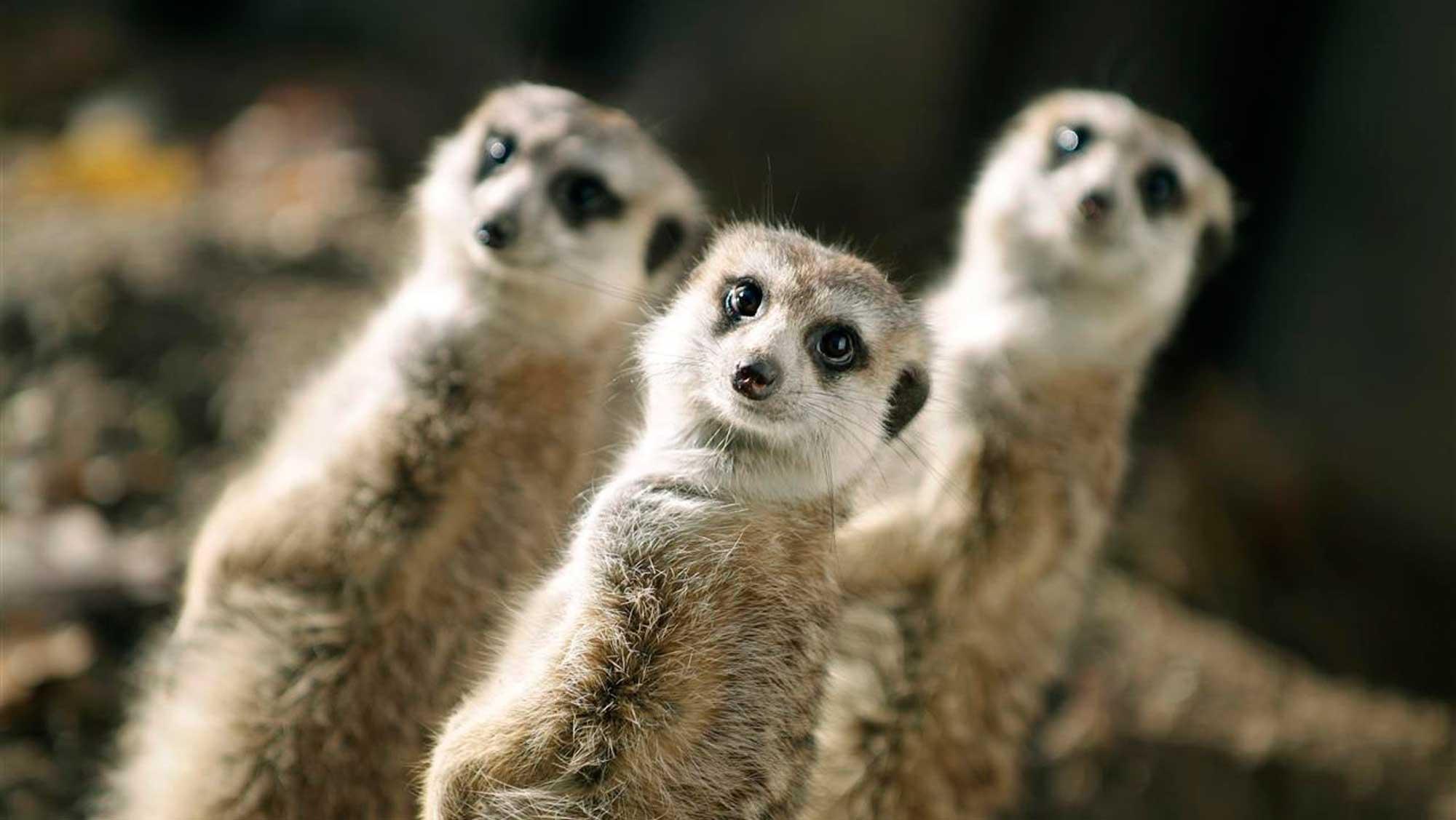 Omgeving Molecaten Park Landgoed Ginkelduin 12 dierenpark Amersfoort