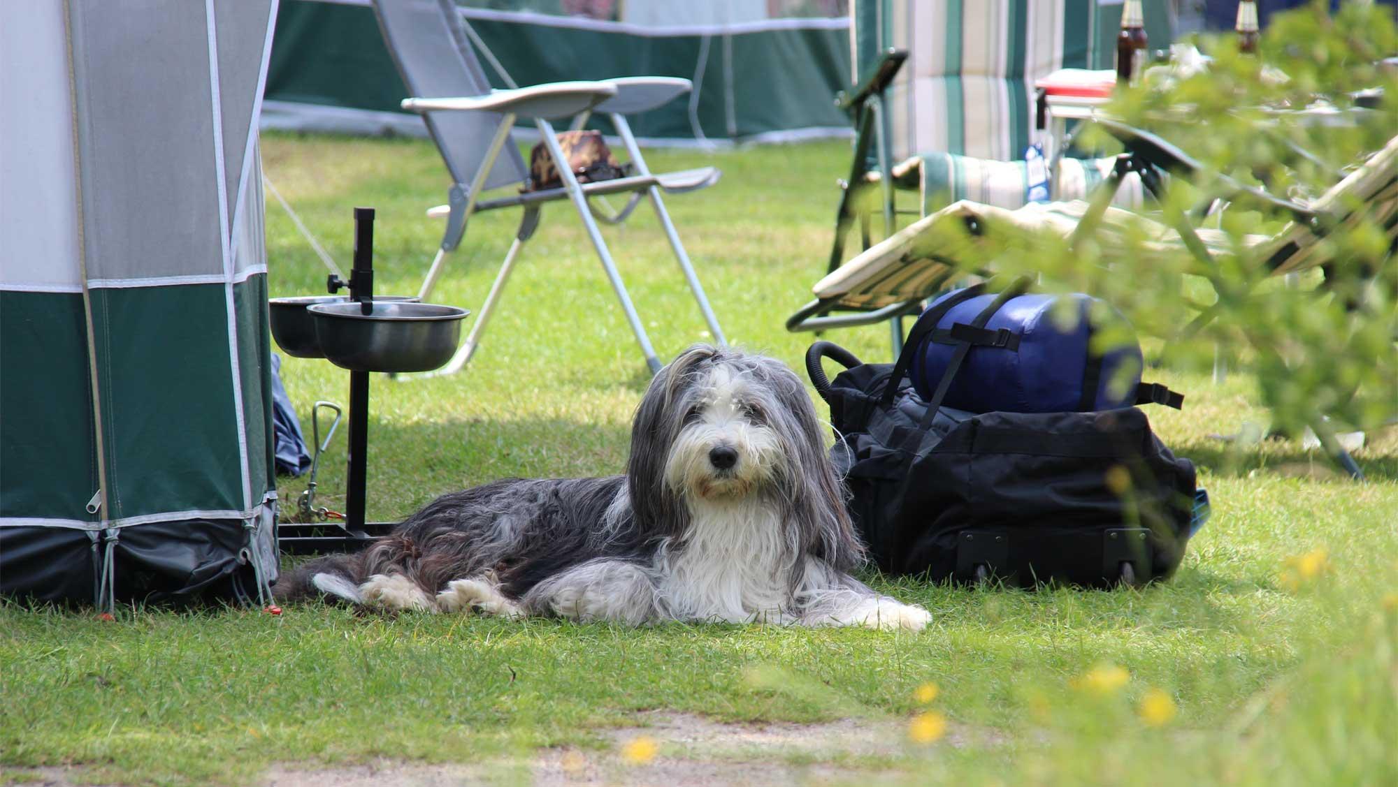 Comfortplaats tot 105m2 huisdierveld kamperen Molecaten Park Hoogduin 01