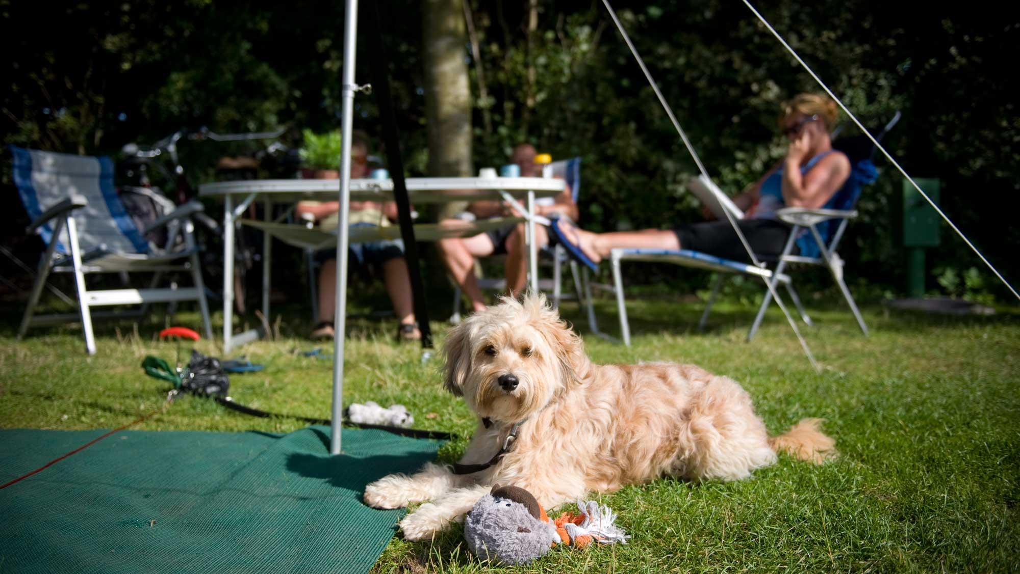 Campercomfortplaats B kamperen Molecaten Park Wijde Blick 01