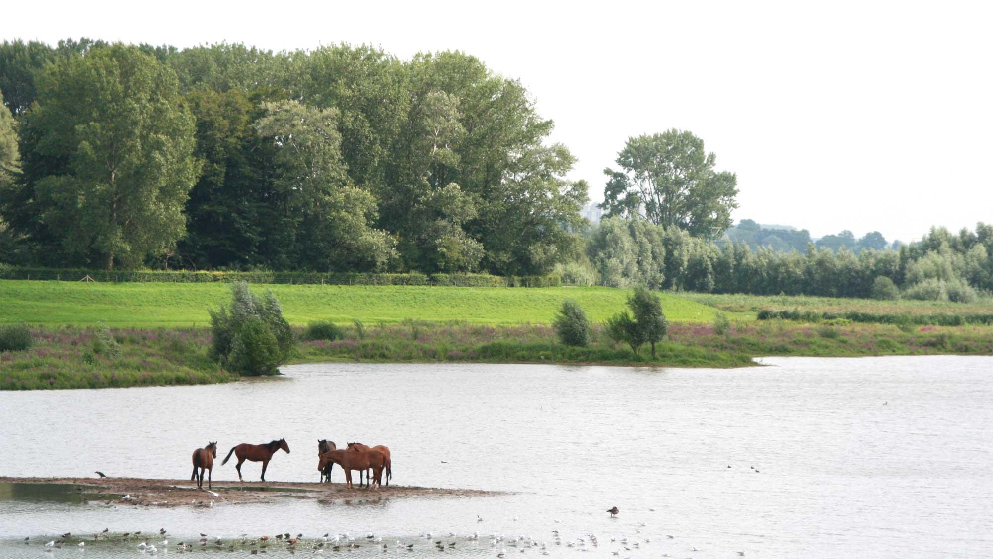 Omgeving Molecaten Park De Agnietenberg 20 paarden uiterwaarden IJssel