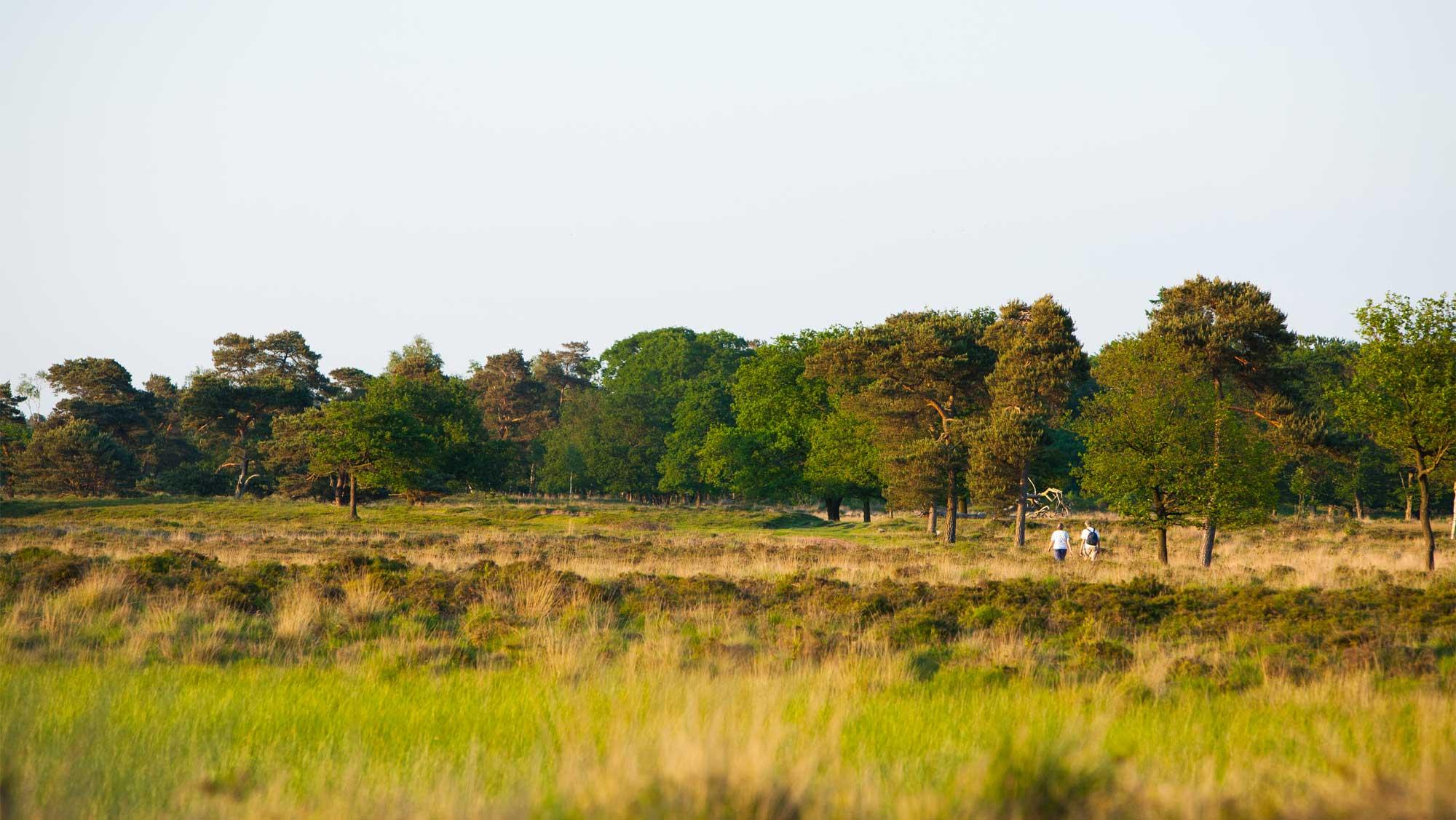 Omgeving Molecaten Park Landgoed Ginkelduin 01 Leersumse veld