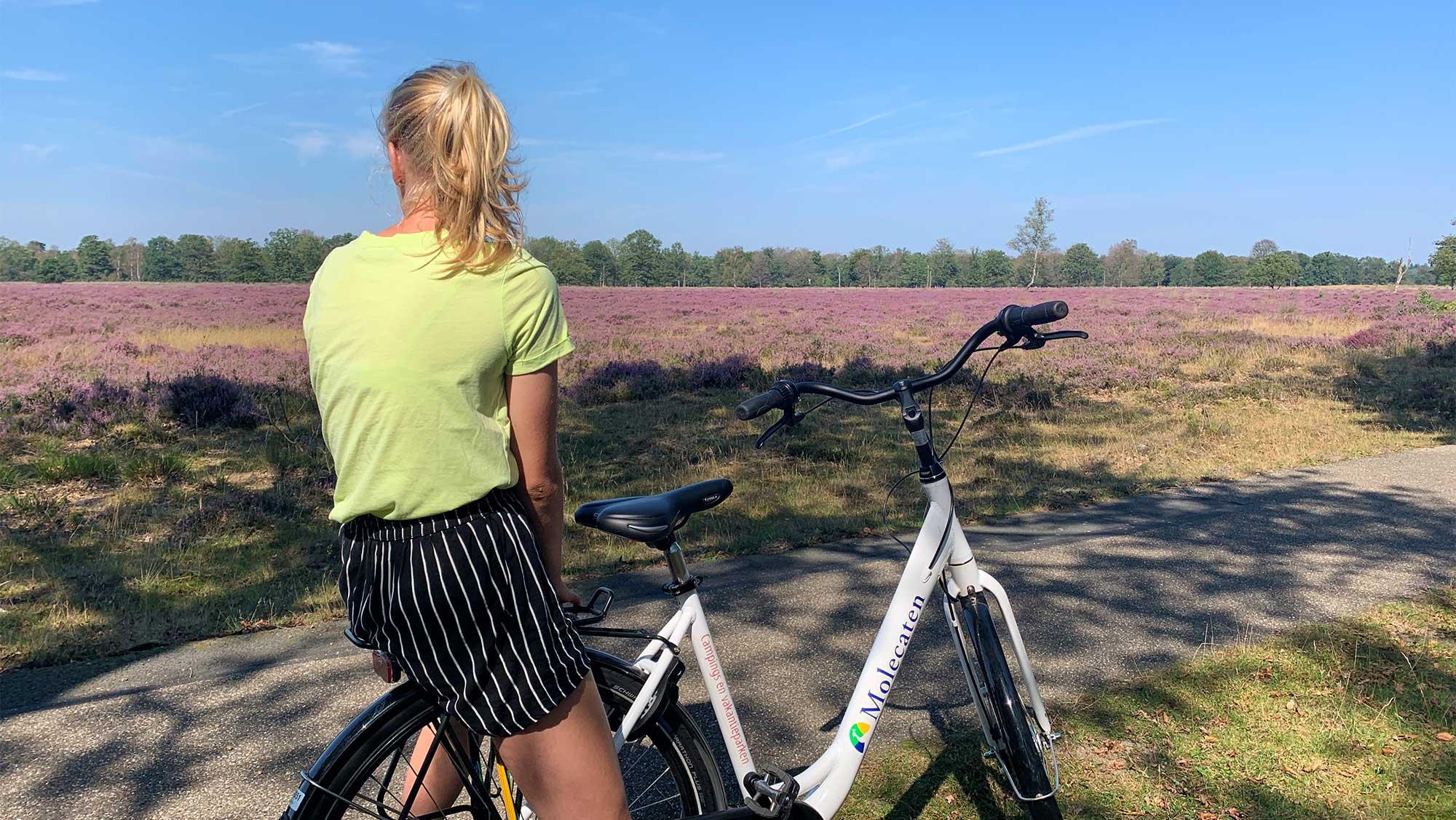 Omgeving Molecaten Park Kuierpad Drenthe 07 schaapskudde
