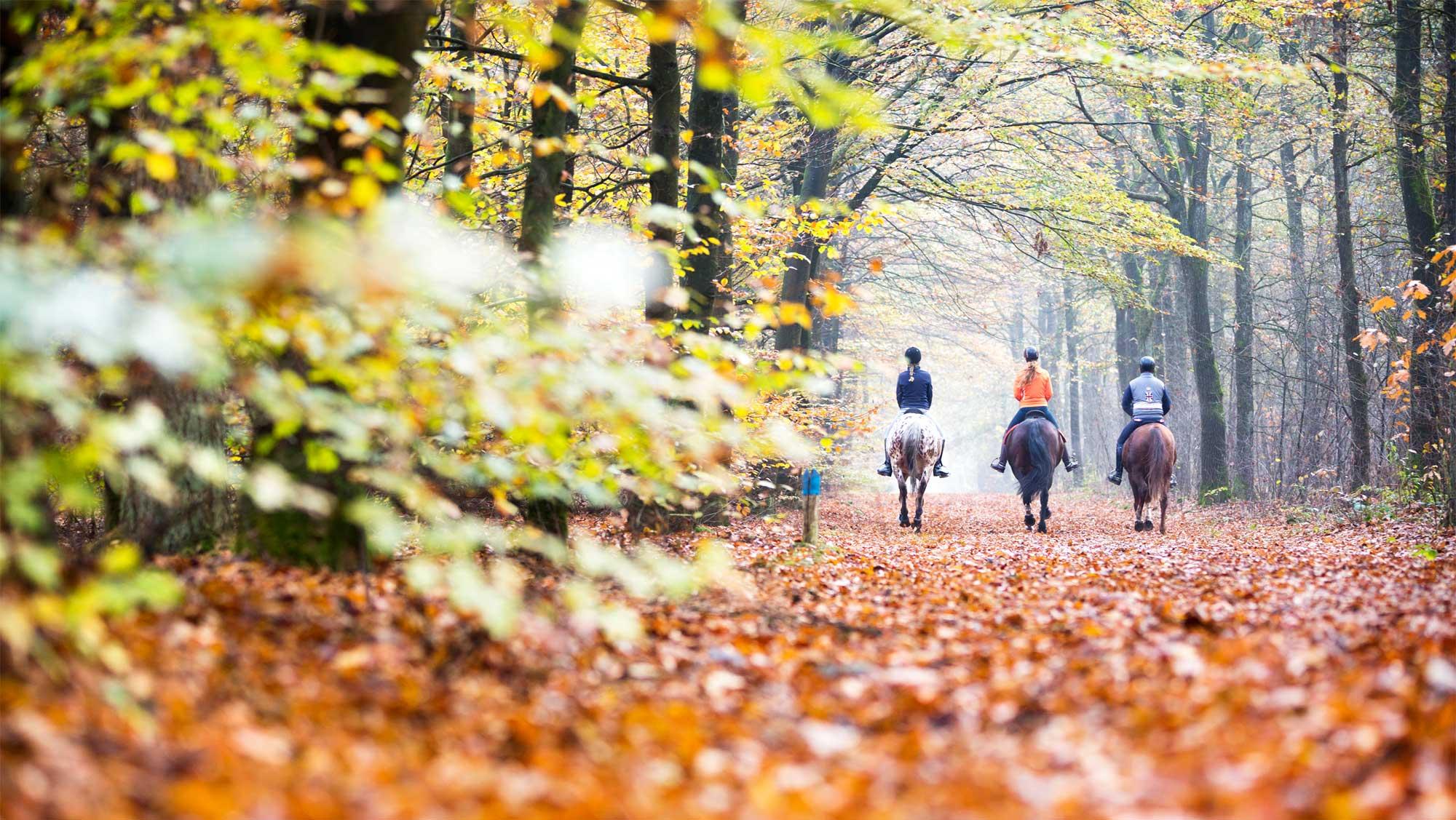Molecaten campings en vakantieparken Herfst
